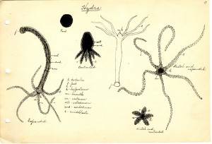 Laboratory Notes and Drawings
