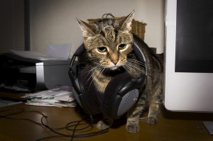 Cat with headphones around its neck, next to a computer monitor