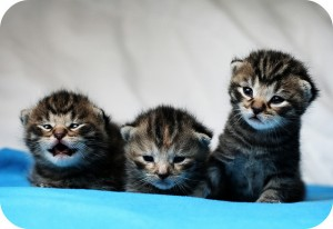 Three kittens illustrate the point about using kitten pictures.