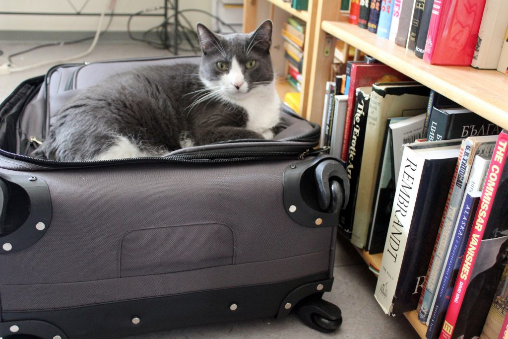 Cat in a suitcase next to bookshelf